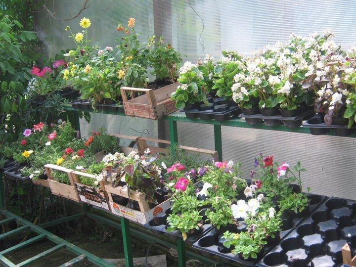 piante e fiori di diverse specie