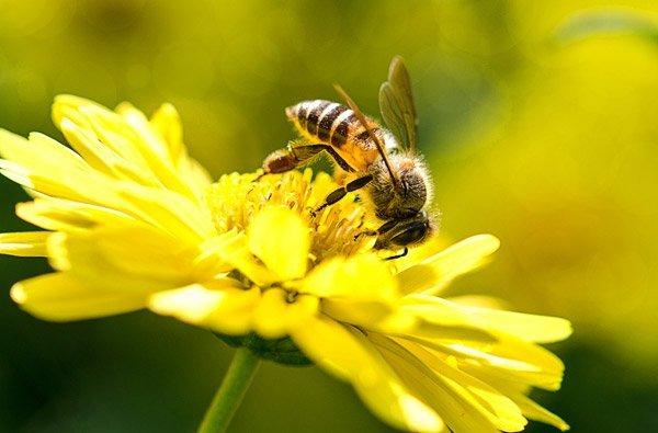 un'ape su un fiore