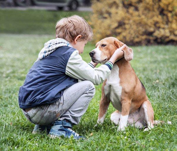 un bambino e un beagle