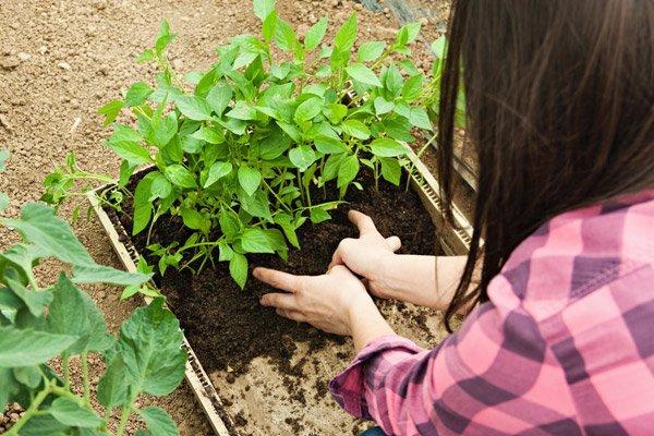 una donna cura le piante
