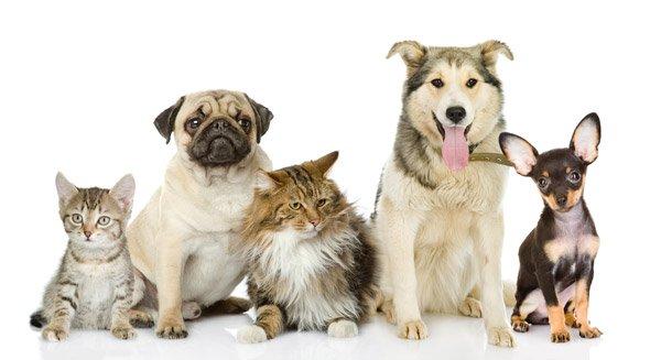 due cani e un gatto