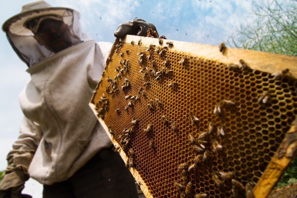 apicoltore a lavoro