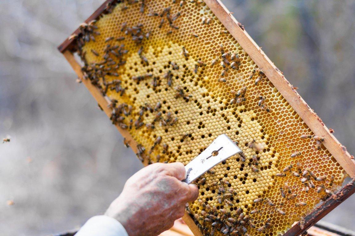 Arnia con api e miele