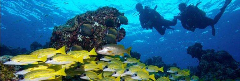 maldive turismo immersione