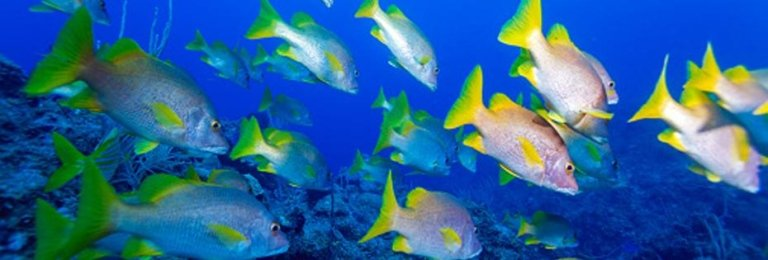 vacanza Diving in Cuba