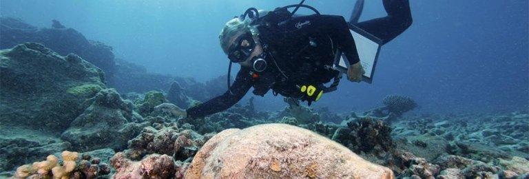 Vacanza diving a Ustica