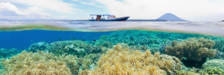 Immersioni in Indonesia