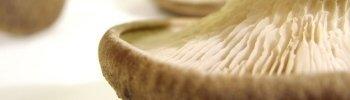 fungo cardoncello