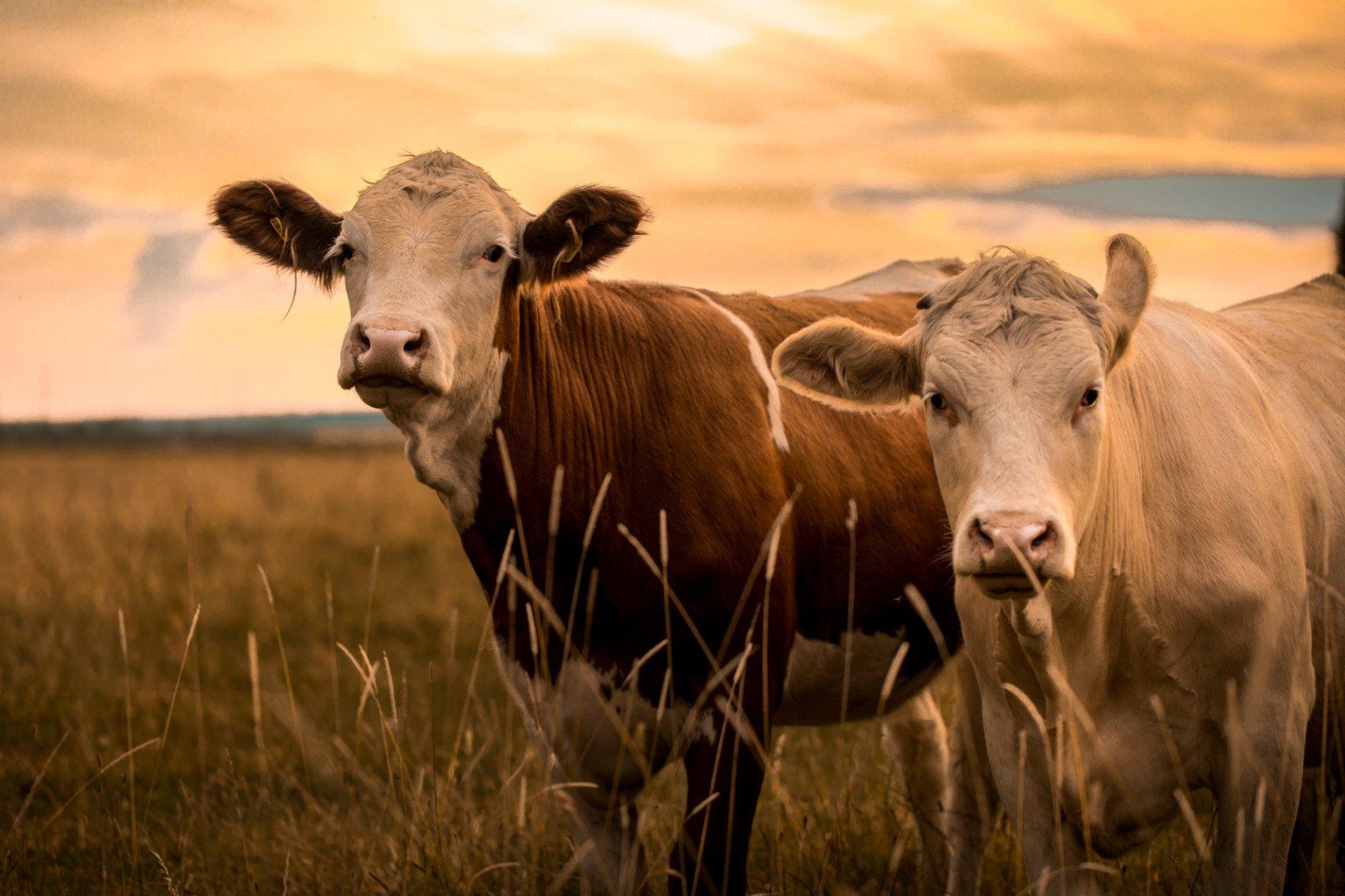 Livestock Insurance Market