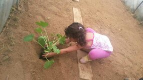 bambina pianta una pianta