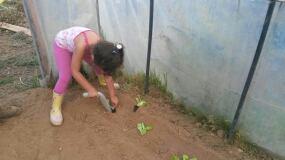 bambina pianta delle piantine