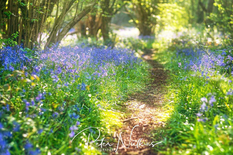 Bluebell Pathway