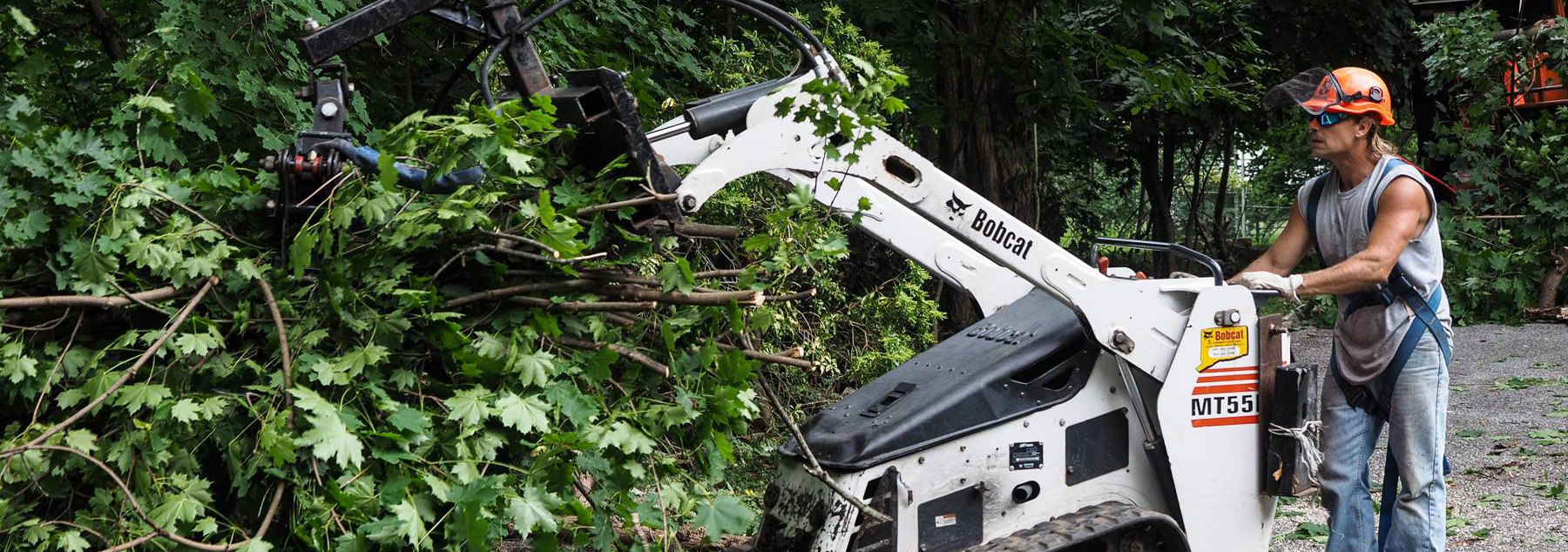Tree Removal Services Westport