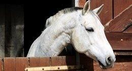 pensione per pony, gare equestri