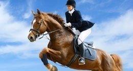 maneggio, pensione cavalli