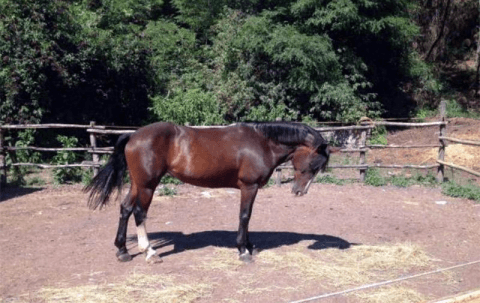 Passeggiate a cavallo Savona
