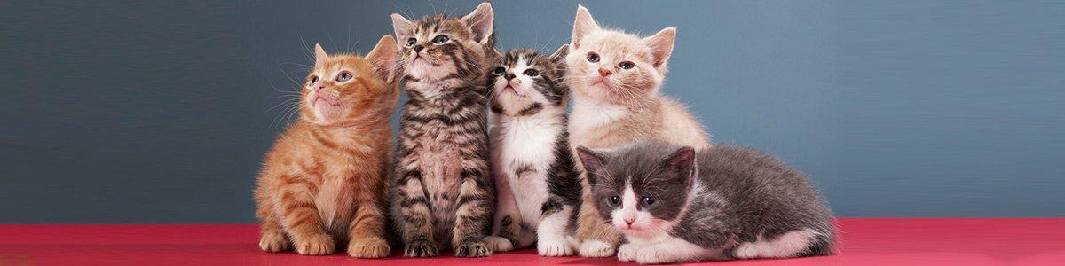 toucan pet centre kittens