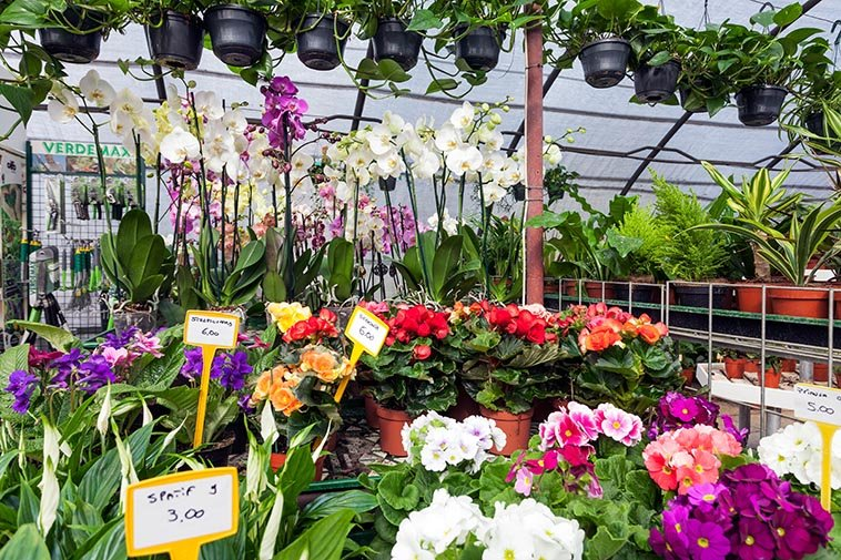 Vivaio fiori e piante