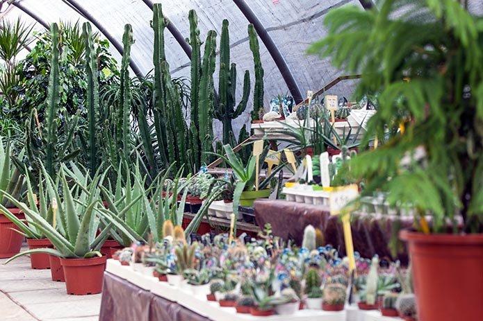 Vendita piante grasse e cactus