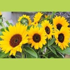 Servizi per floricoltura