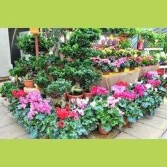 Ingrosso piante