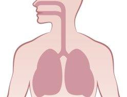 apparato respiratorio