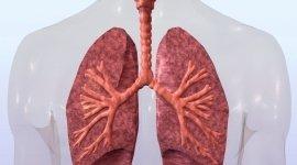 cura malattie respiratorio, cura sindromi allergiche, sindromi allergiche