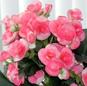 pianta in fiore