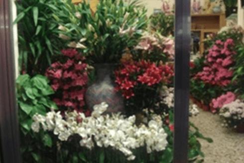 fiori freschi recisi