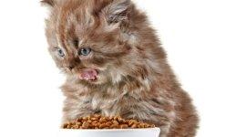 prodotti alimentari per animali, bagno terapeutico, articoli per toelettatura