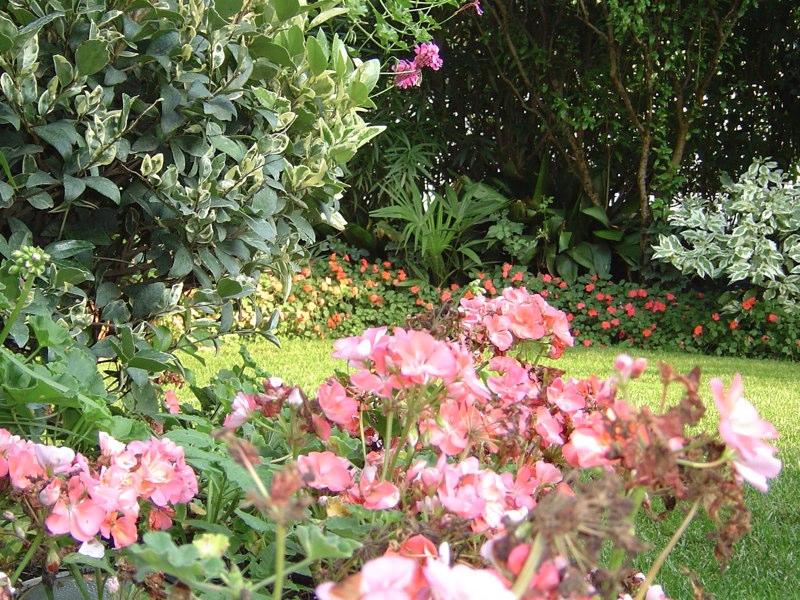 vista di fiori rosa