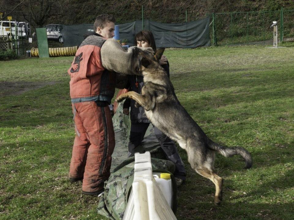 guardia e difesa cani genova
