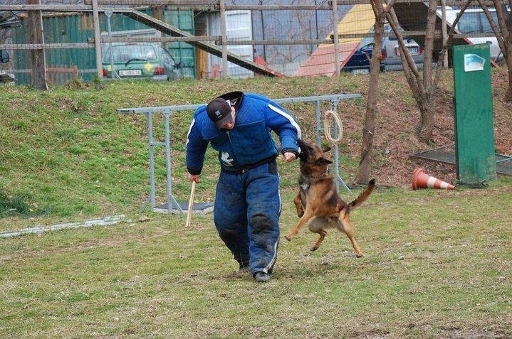 mondioring cani genova