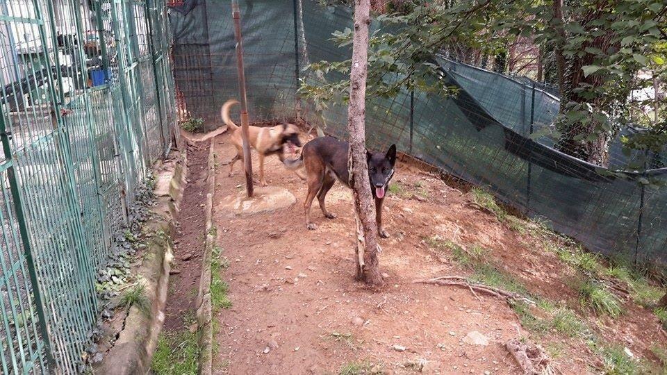 pensione per cani genova