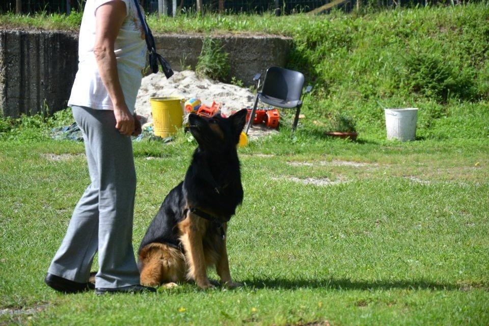corso obbedienza cani genova