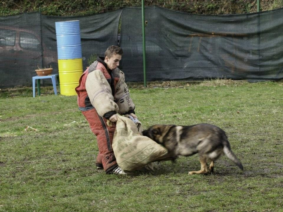 addestramento cani genova