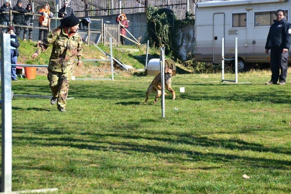 Corso di agility cani