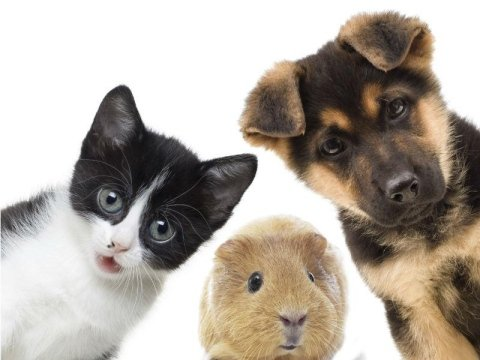 Antiparassitari per animali
