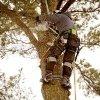 trattamenti antiparassitari alberi
