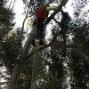 manutenzione alberi