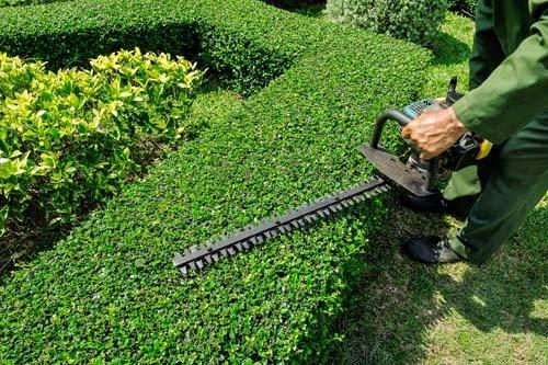 Garden maintenance work in progress