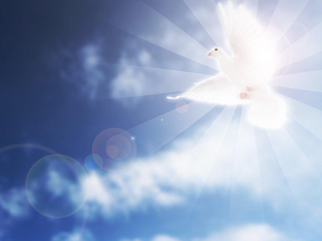 Una colomba bianca volando di fronte al sole