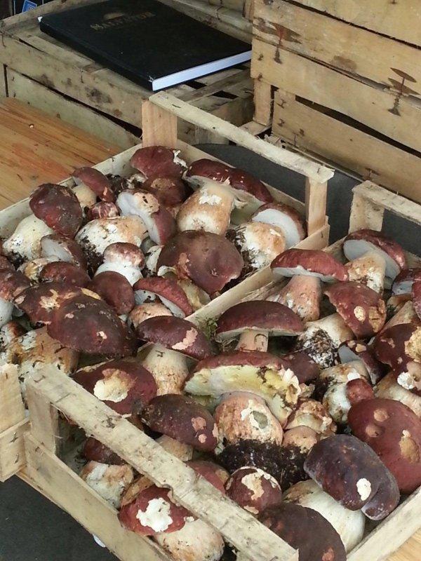 ingrosso funghi porcini