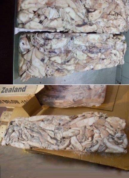 vendita Calamari gelo Nuova Zelanda