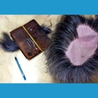 parrucchino