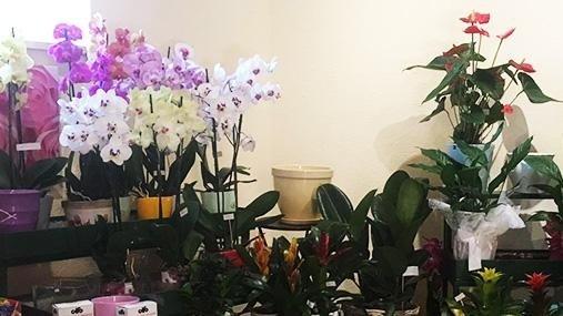 Fiori e piante Popoli