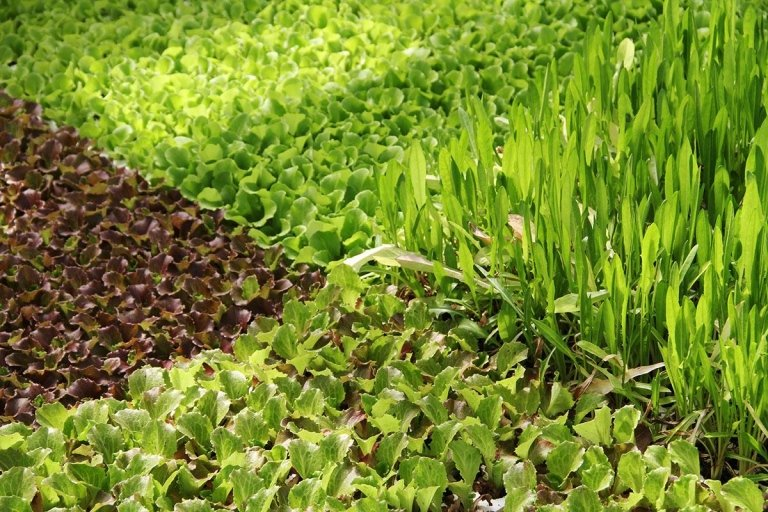 Progettazione area verde