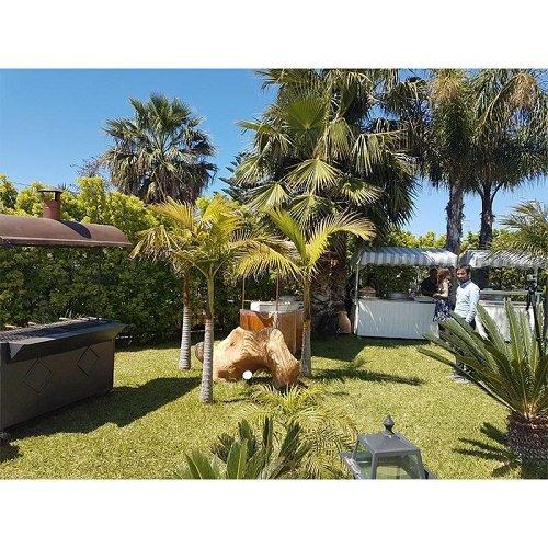 un giardino con delle palme