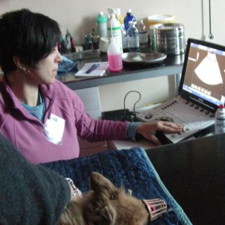 La Dottoressa Valentina Colla in camice rosa effettua una radiografia ad cane
