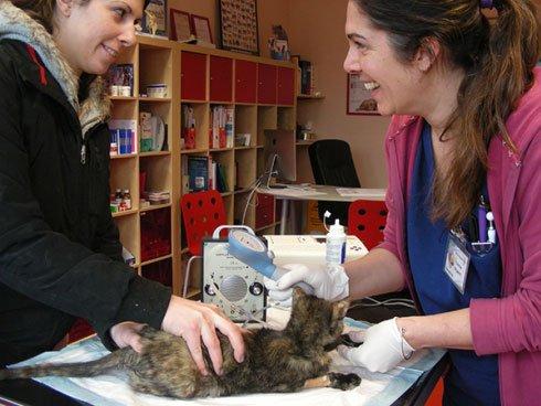 una dottoressa con un gatto e il suo padrone